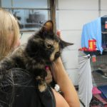 Volunteer holding Mia, a calico cat.