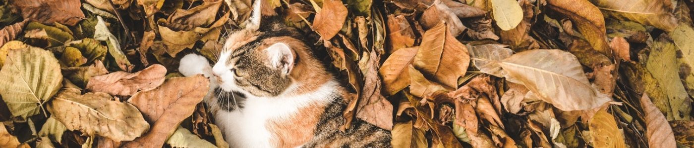 Cat lies in the leaves.