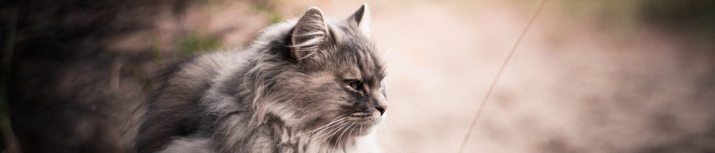 A cat looks into the distance.